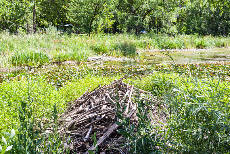 Lilly pond makers' house @ Yakima Sportsmen SP