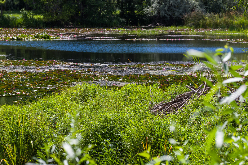 Lilly pond at Yakima Sportsmen SP