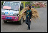 Farmer carrying straw past tour vehicle...