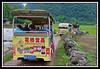 Convoy of tour vehicles along farm road...