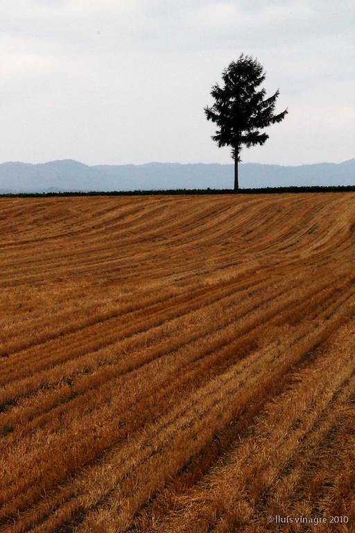 colina de meruhen, memanbetsu, hokkaido / 女満別 メルヘンの丘、北海道