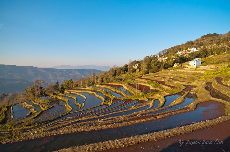 Rice Terrace - Xinjie, Yunnan Province, China