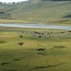Pastoral scene in Yellowstone;s Lamar Valley.