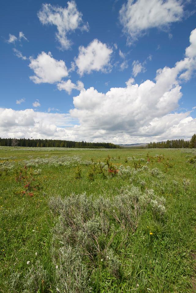 Grassy Meadow near Fishing Bridge, Yellowstone Lake