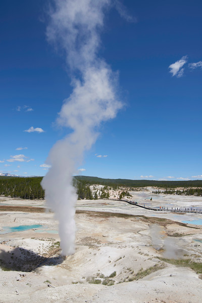 Black Growler Steam Vent, Norris Geyser Basin