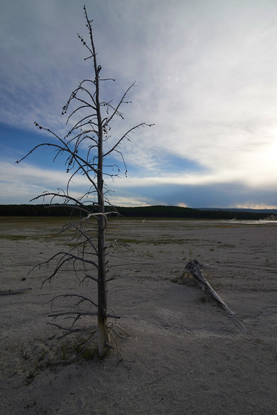 Dead Tree, Lower Geyser Basin