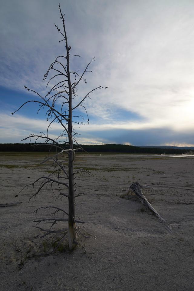 Dead Tree, Lower Geyser Basin