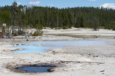 Back Basin area, Norris Geyser Basin