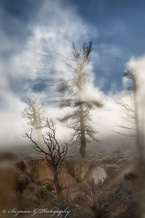 Steam from Mammoth Hot Springs in Yellowstone National park creating eerie trees. January 17, 2014