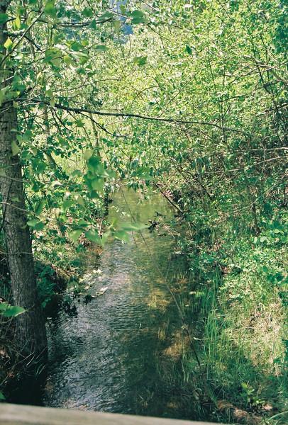 Creek by Swan Lake, Montana