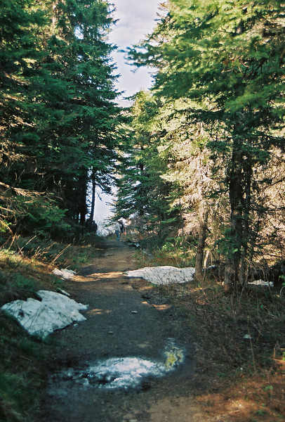 Trail between Josephine and Swiftcurrent Lakes