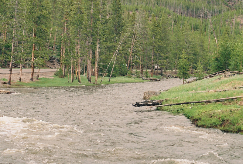 Gibbon River, Yellowstone.  We saw a coyote swim across it, but I wasn't fast enough with my camera to get a picture.