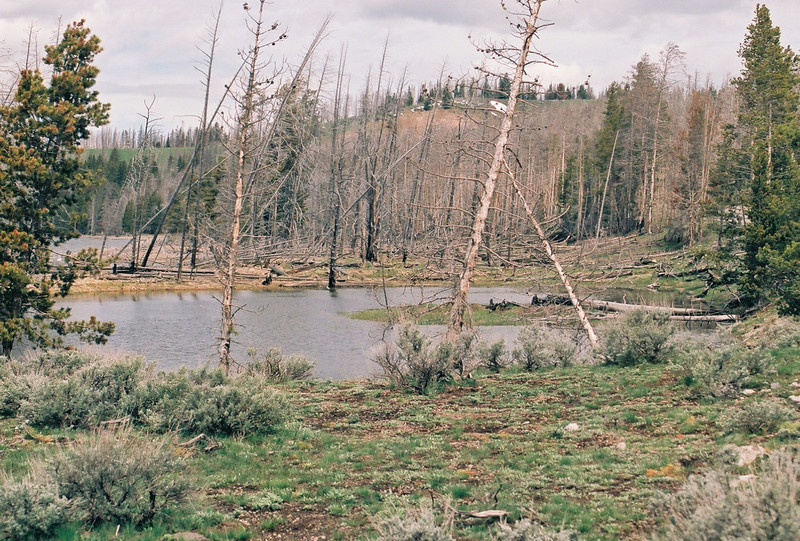 Pond near Lake Yellowstone (Sedge Bay?)