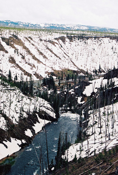 Lewis River Canyon - this area was so severely burned in the 1988 fire that it has never regenerated.