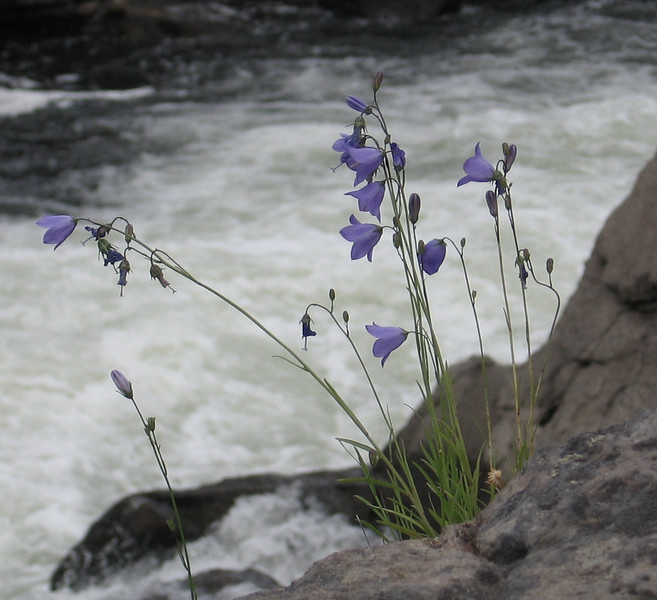 Some flowers growing next to the river.
