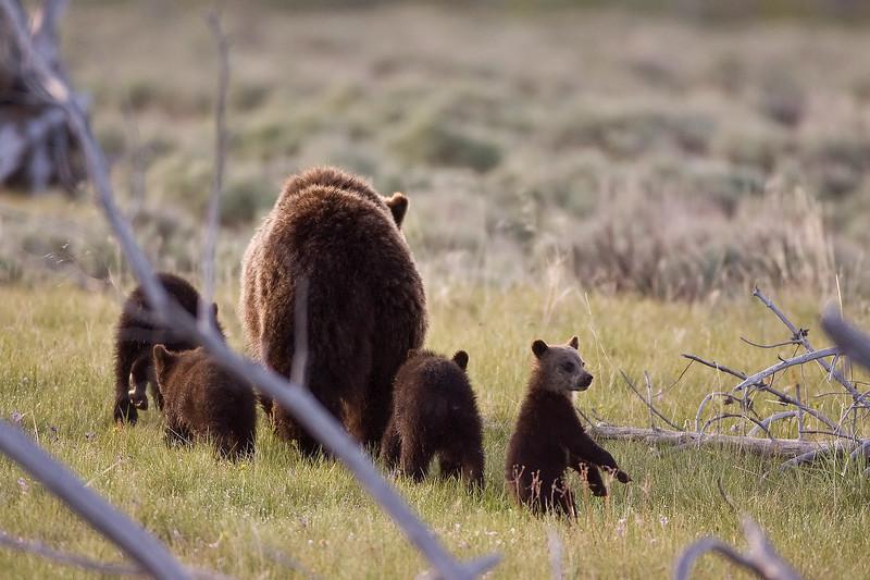 Yellowstone_Sample_10_0003