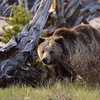 Yellowstone_Sample_10_0001