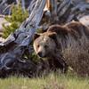 Yellowstone_Sample_10_0001