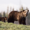 Yellowstone_Sample_10_0005