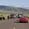 Yellowstone_Sample_10_0009