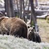 Yellowstone_Sample_10_0038