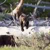 Yellowstone_Sample_10_0002