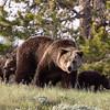 Yellowstone_Sample_10_0004