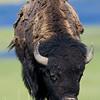 Yellowstone_Sample_10_0014