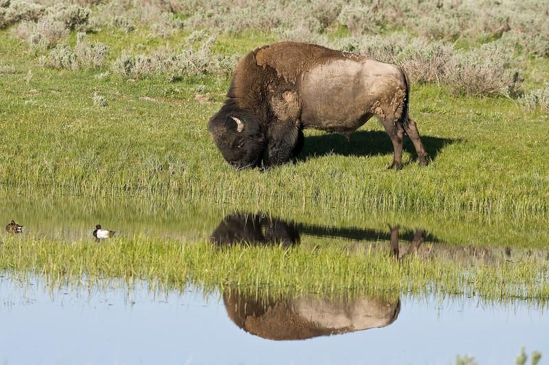 Yellowstone_Sample_10_0015