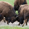 Yellowstone_Sample_10_0016
