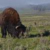 Yellowstone_Sample_10_0010