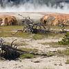 Yellowstone_Sample_10_0047