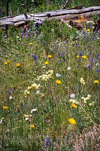 Wild flowers just strated blooming in late June/early July.