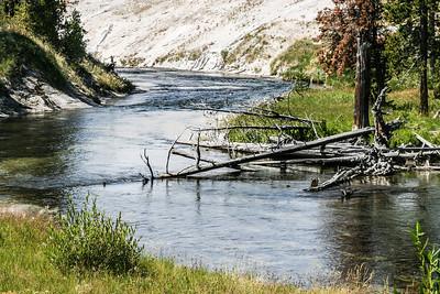Yellowstone-8543