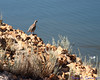 At Antelope Island State Park.