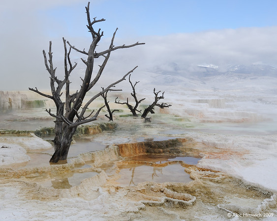 """Here is another view of those picturesque dead trees at Canary Springs.  In defense of anticipated criticism for posting so many photos from the same site, I can only say that this was a gorgeous place.  And, others have found it so too.  Just Google """"Canary Springs, Yellowstone"""" and you will see many photos of this beautiful place."""