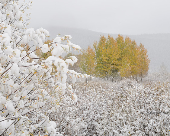 We took the Laurence Rockefeller Parkway to go from Grand Teton NP to Yellowstone NP with snow falling intermittently.  <br /> <br /> This was an early snow for this region.  As you can see the Aspens had not yet lost their leaves.