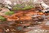 Mud Geyser area
