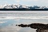 Yellowstone Lake was still frozen but beginning to melt out when I arrived mid May.