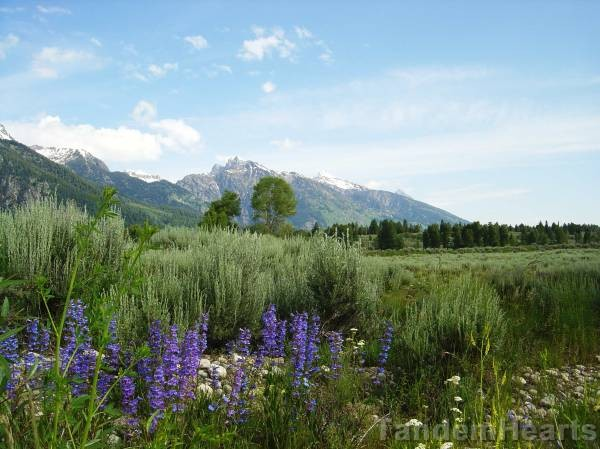 Flowers at the entrance to Grand Teton National Park.