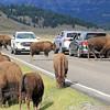2019-09-07_237_Yellowstone_Lamar Valley_Bison.JPG