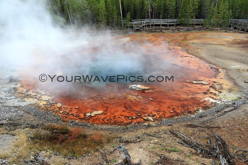 2019-09-08_293_Yellowstone_Norris Geyser Basin_Echinus Geyser.JPG