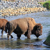 2019-09-07_256_Yellowstone_Lamar Valley_Bison.JPG