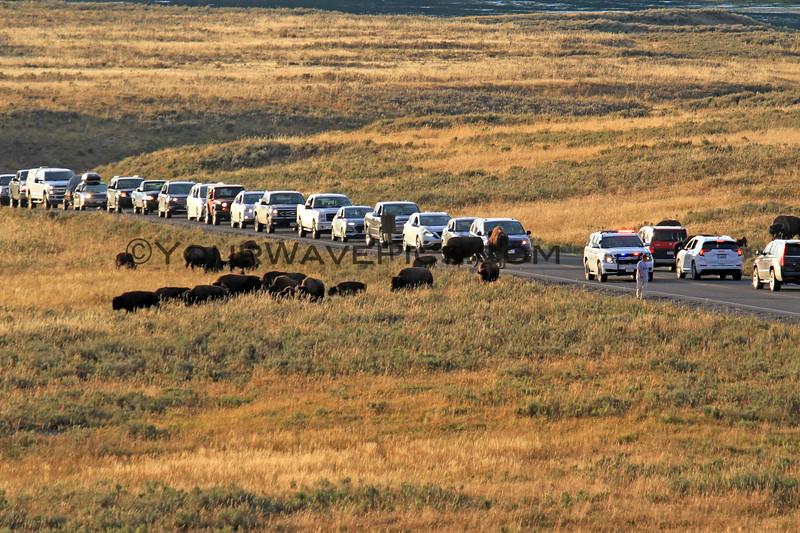 2019-09-05_73_Yellowstone_Hayden Valley_Bison.JPG