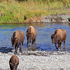 2019-09-07_247_Yellowstone_Lamar Valley_Bison.JPG
