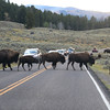 2019-09-07_267_Yellowstone_Lamar Valley_Bison.JPG