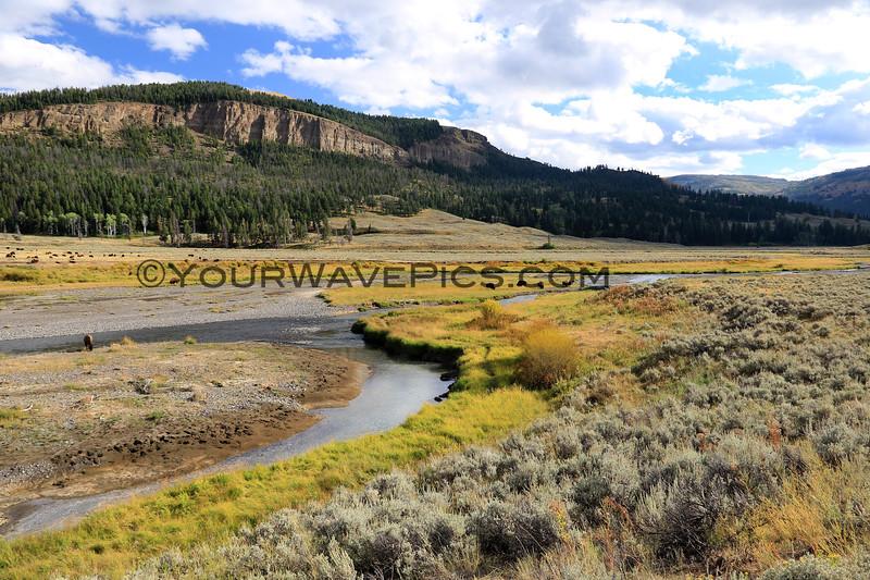 2019-09-07_244_Yellowstone_Lamar River.JPG