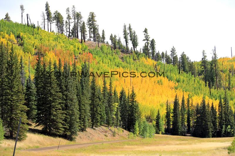 2019-09-24_1479_Arizona_Grand Canyon_Fall Colors.JPG