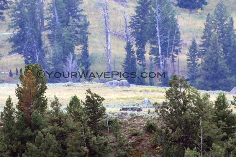 2019-09-10_397_Yellowstone_Lamar Valley_Wolf Pups on Rock.JPG