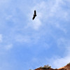 2019-09-26_1627_Utah_Zion_Condor.JPG